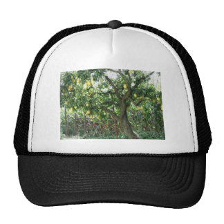 Pears on tree branches trucker hat