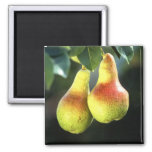 Pears Refrigerator Magnets