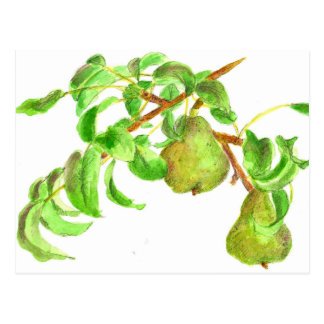 Pears Watercolor Summer Fruit Painting Postcard