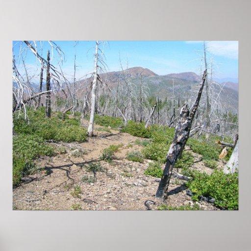 Pearsoll Peak Fire Lookout Kalmiopsis Wilderness Poster