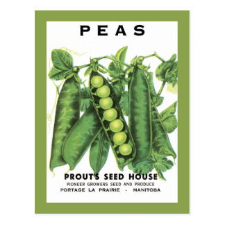 Peas Seed Packet Postcard