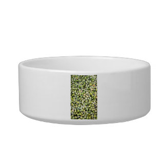 Peas Sprouts Bowl