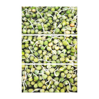 Peas Sprouts Canvas Print