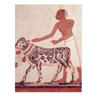Peasant leading a cow to sacrifice postcard