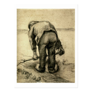 Peasant Lifting Beet, Vincent van Gogh Postcard