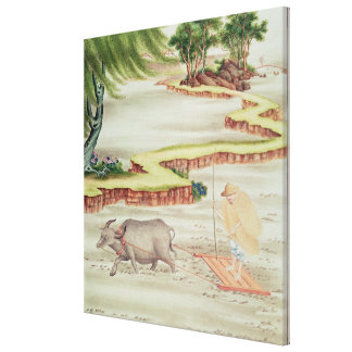 Peasant working in the paddy fields canvas prints
