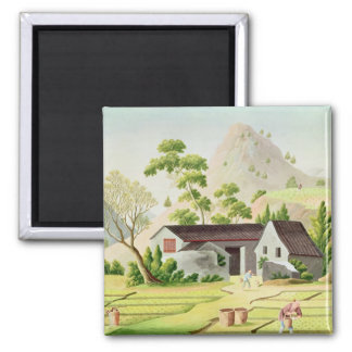 Peasants in the Paddy Fields 2 Inch Square Magnet