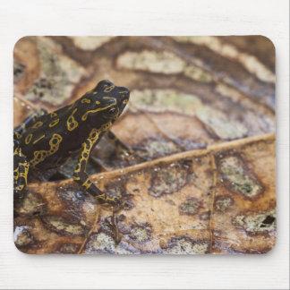 Pebas Stubfoot Toad Atelopus spumarius) Mouse Pad