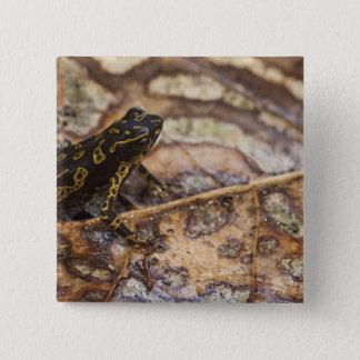Pebas Stubfoot Toad Atelopus spumarius) Pinback Button