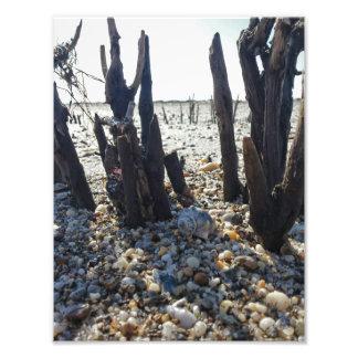 Pebble Beach Fotografías