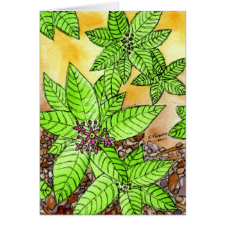 Pebbles and Flowers Greeting Card