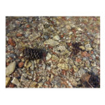 Pebbles in Taylor Creek Water Nature Photography Postcard