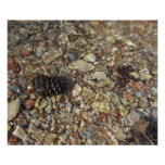 Pebbles in Taylor Creek Water Nature Photography Poster
