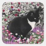 Pecas en flores II - gato del gatito de Tux Calcomanías Cuadradass