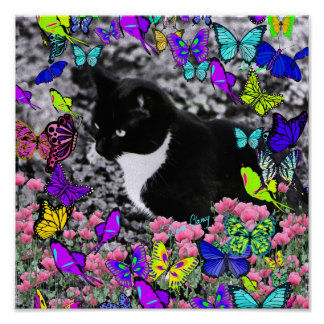 Pecas en mariposas II - gato del smoking Posters