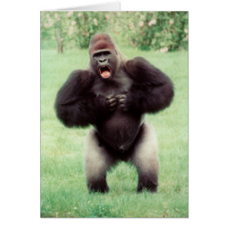 Pecho de derrota del gorila del Silverback Tarjetón