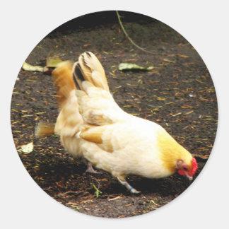 Peck de la gallina pegatina redonda