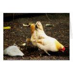 Peck de la gallina tarjeta
