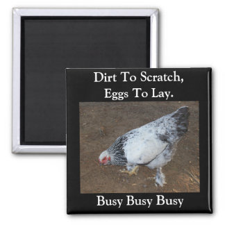 Pecking Chicken 2 Inch Square Magnet