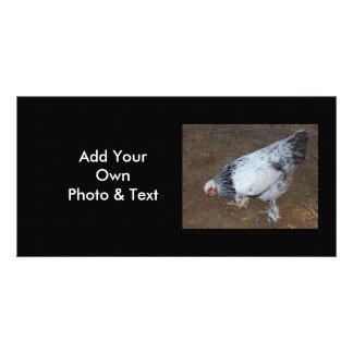 Pecking Chicken Photo Card