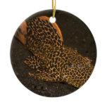 Peckoltia Compta Ceramic Ornament
