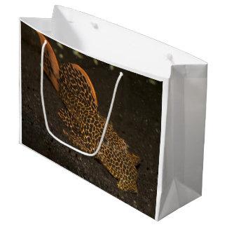 Peckoltia Compta Large Gift Bag