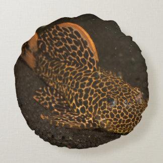 Peckoltia Compta Round Pillow