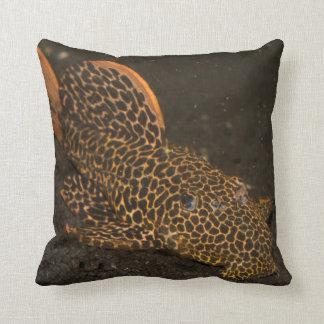 Peckoltia Compta Throw Pillow