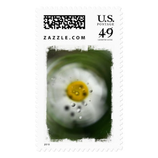 Peculiar Daisy; No Text Stamps