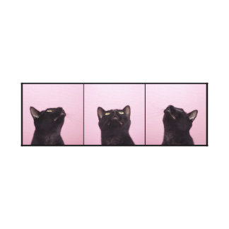 Peculiar Panther Black Cat Stretched Canvas Print