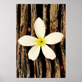 Pedazo hawaiano de la declaración del Plumeria Póster