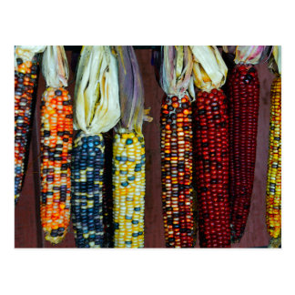 Pedernal colorido o maíz indio tarjeta postal