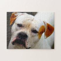 Pedigree Bulldog. Jigsaw Puzzle