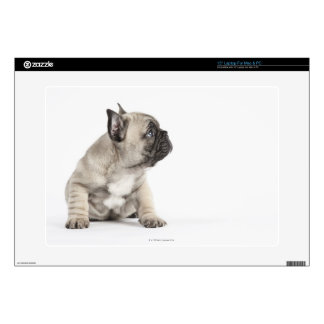 Pedigree puppy decal for laptop