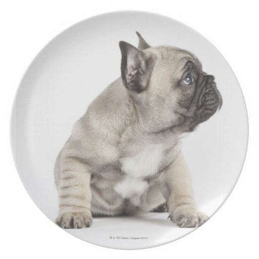 Pedigree puppy party plates