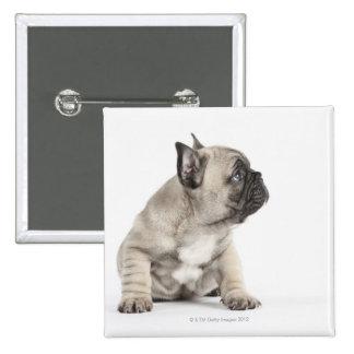 Pedigree puppy pinback button
