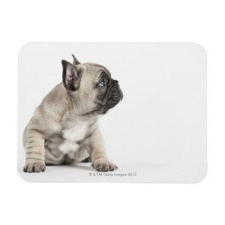Pedigree puppy vinyl magnets