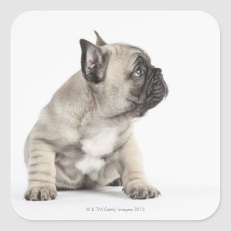 Pedigree puppy square sticker