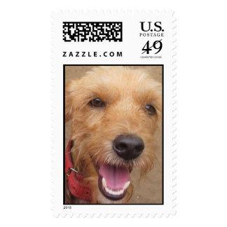 Pedro Postage Stamp