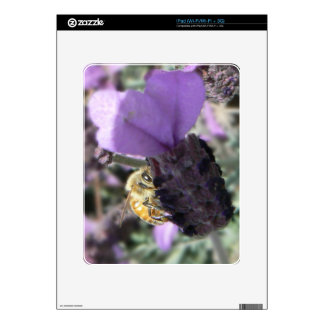 Peek-A-Bee Decal For iPad