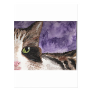 Peek a boo Calico Kitty Cat Postcard