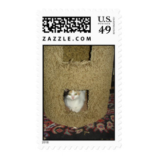 Peek-a-boo Calico Postage Stamps