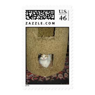 Peek-a-boo Calico Stamp