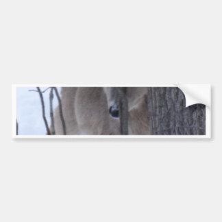 peek-a-boo deer. bumper sticker