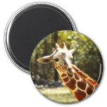 Peek-a-Boo Giraffe Magnets