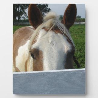 Peek a Boo Horse Plaque