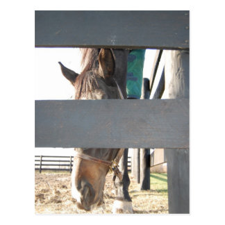 Peek a boo horse play postcard