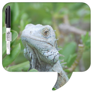 Peek-a-boo Iguana Dry-Erase Board