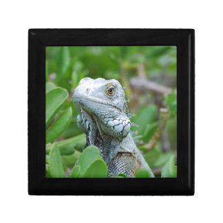 Peek-a-boo Iguana Gift Box