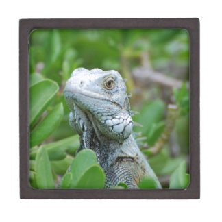 Peek-a-boo Iguana Jewelry Box
